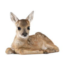 Nástenná samolepka Dekornik Deer Lucy, 115 x 94 cm