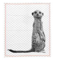 Utierka Present Time Raster Meerkat