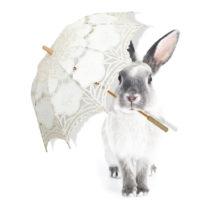 Nástenná samolepka Dekornik Harry Is Singing In The Rain, 43 x 55 cm
